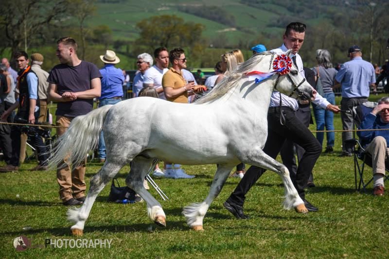 CRUMPWELL BLUE PAINTER - Overall Section A champion